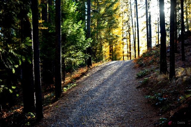 path forest uphill autumn light ch rs DSC_0128