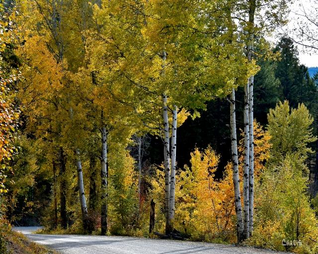 Peavine aspen autumn ch crop DSC_0253