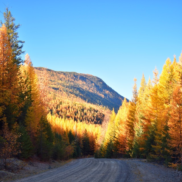 tamarack larch road sq DSC_0084