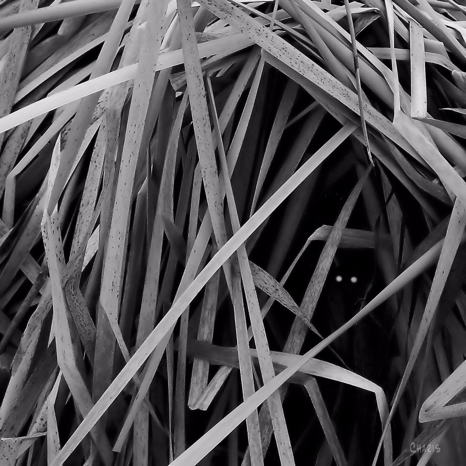 two eyes reeds bw sq 027 bw