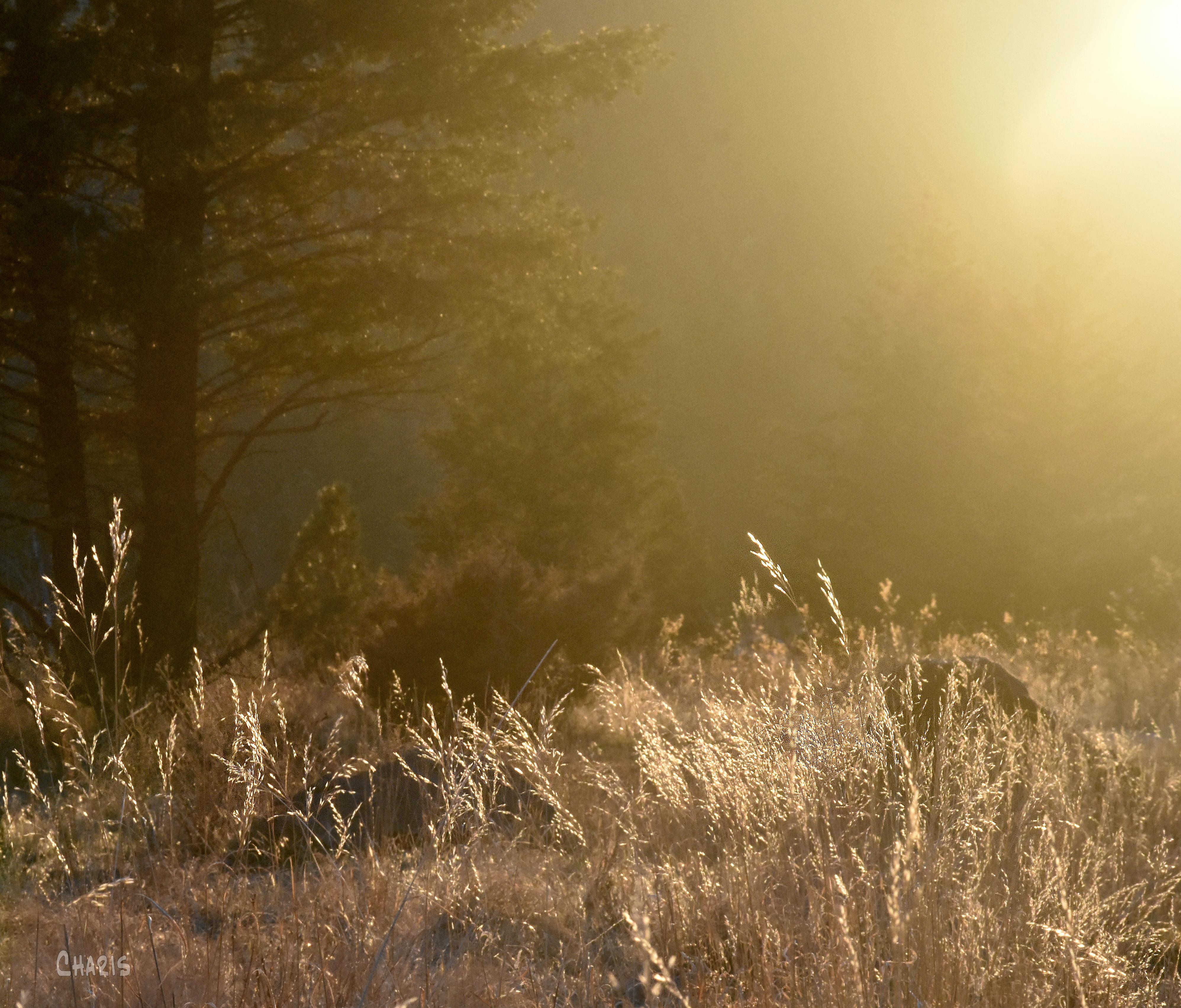 silhouette into the sun DSC_0377
