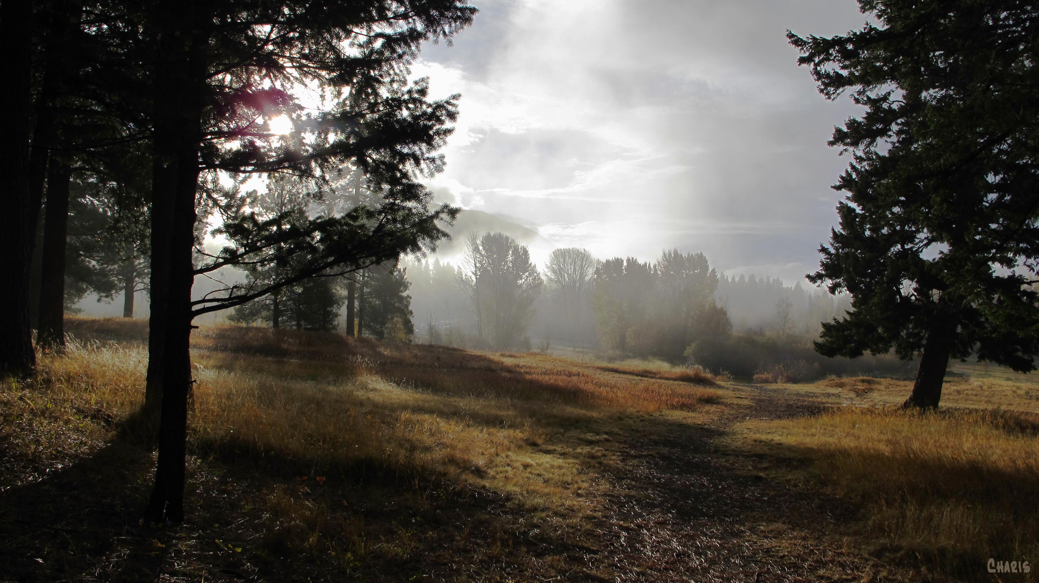 idlewild fog path ch IMG_4117