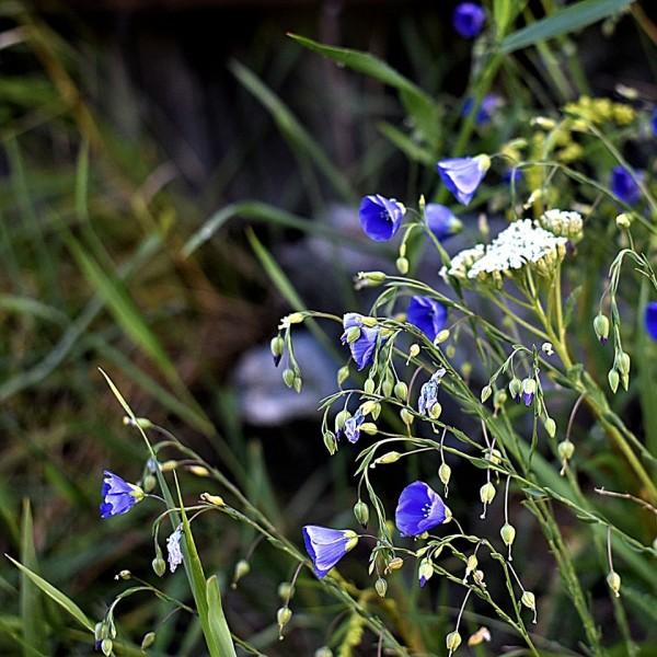 weeds (2)