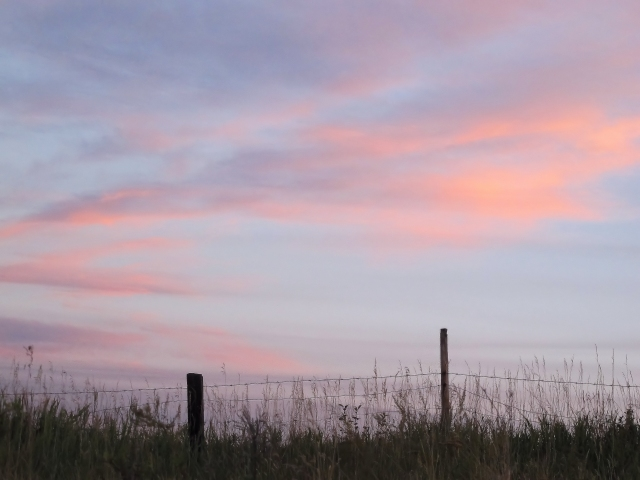 pink sky fence posts IMG_2147