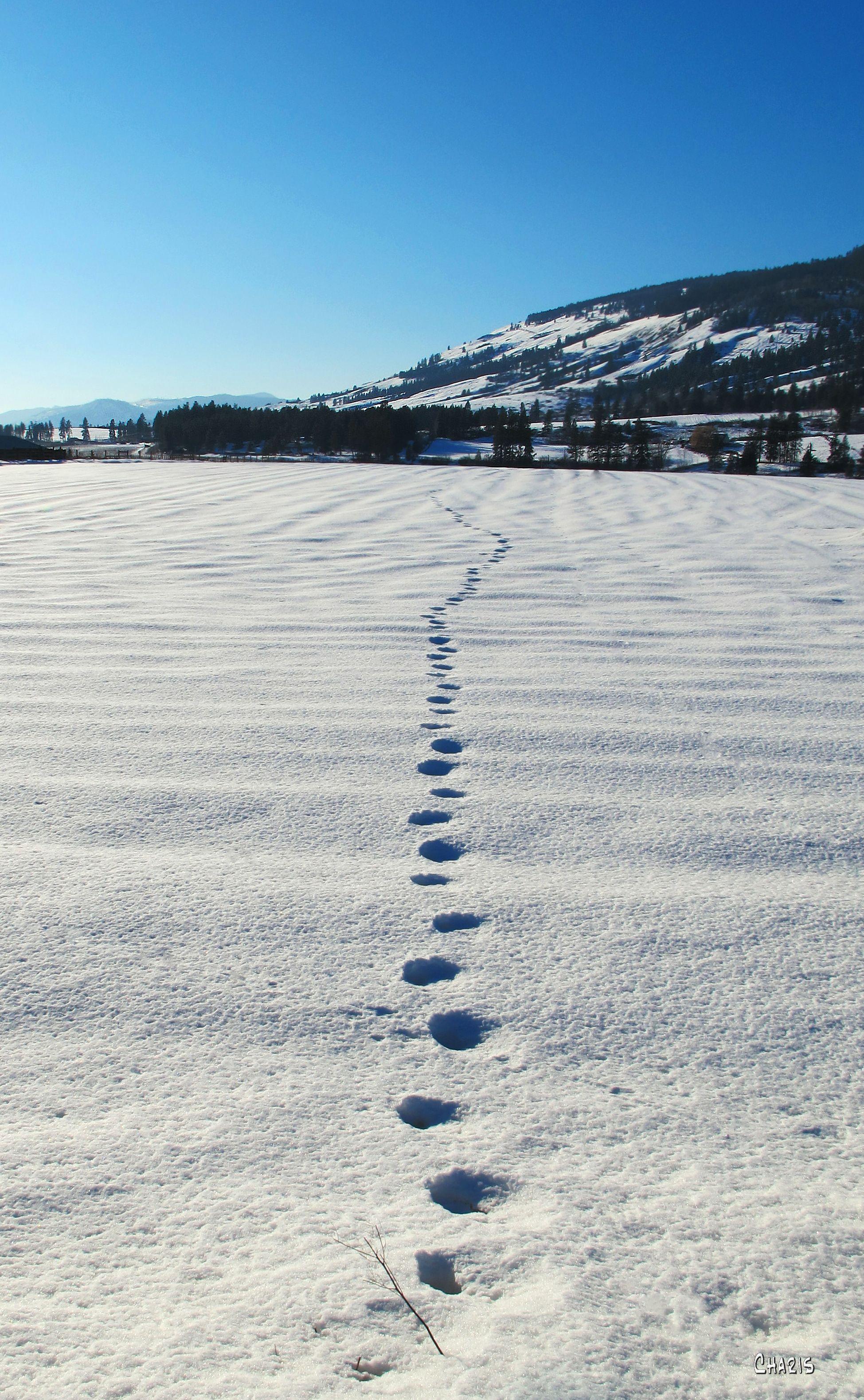 snow tracks winter field ch IMG_0558