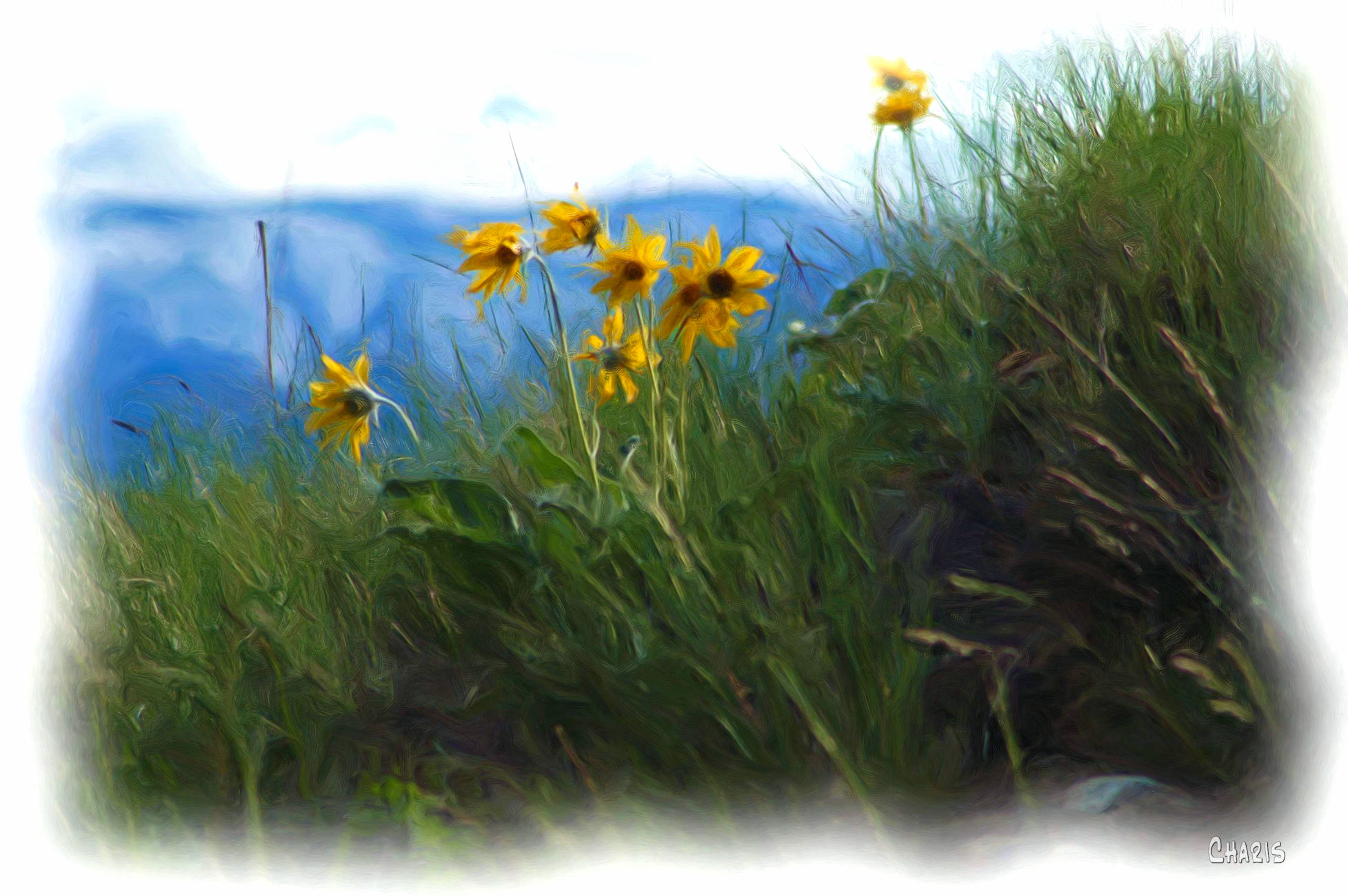 balsamroot ch rs