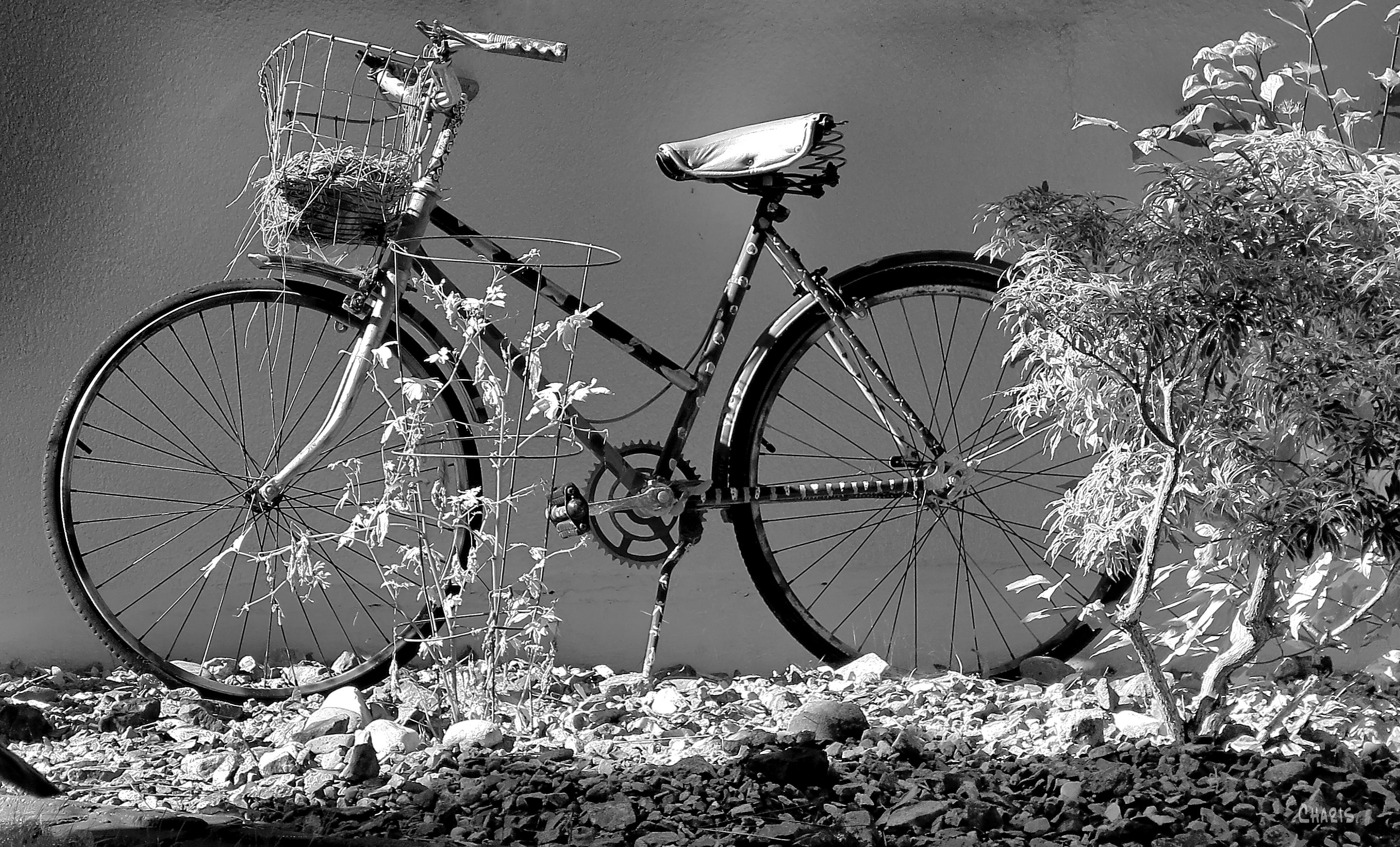 IMG_4421 bicycle bw