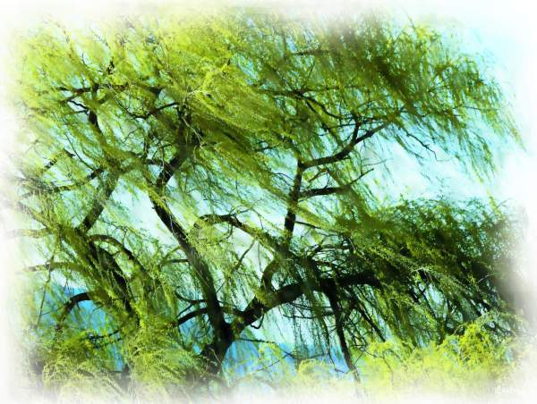 wind in the willow painting
